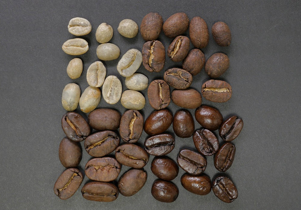 coffee species